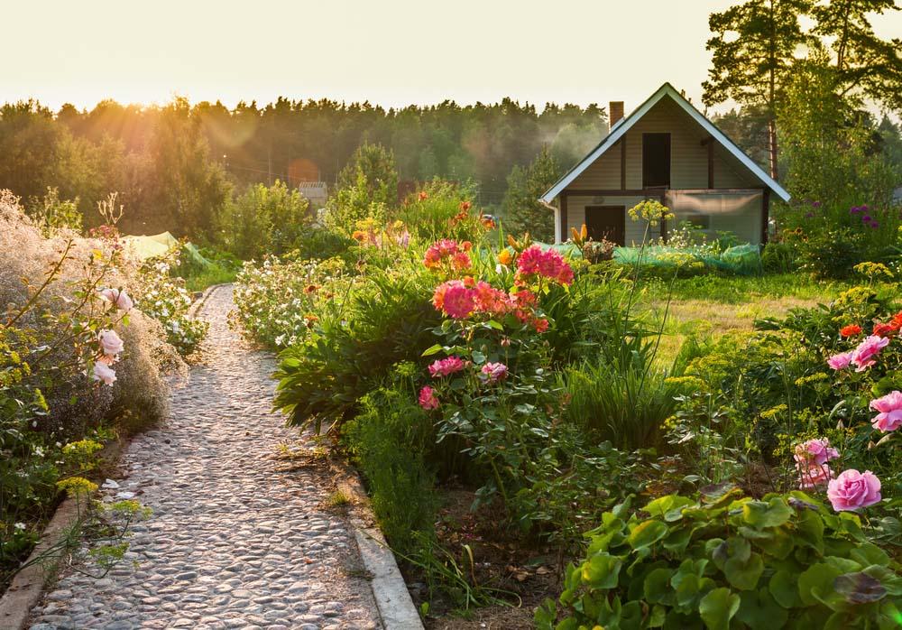 Pathway rose garden