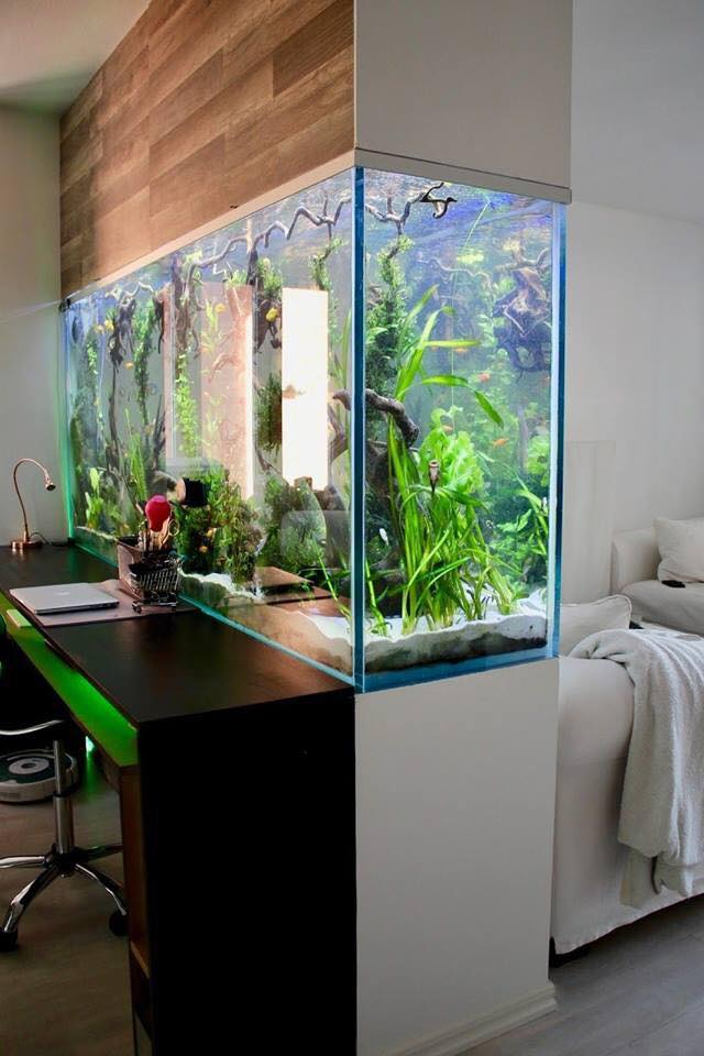 modern aquarium design ideas